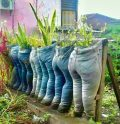 Jeans used as plant container